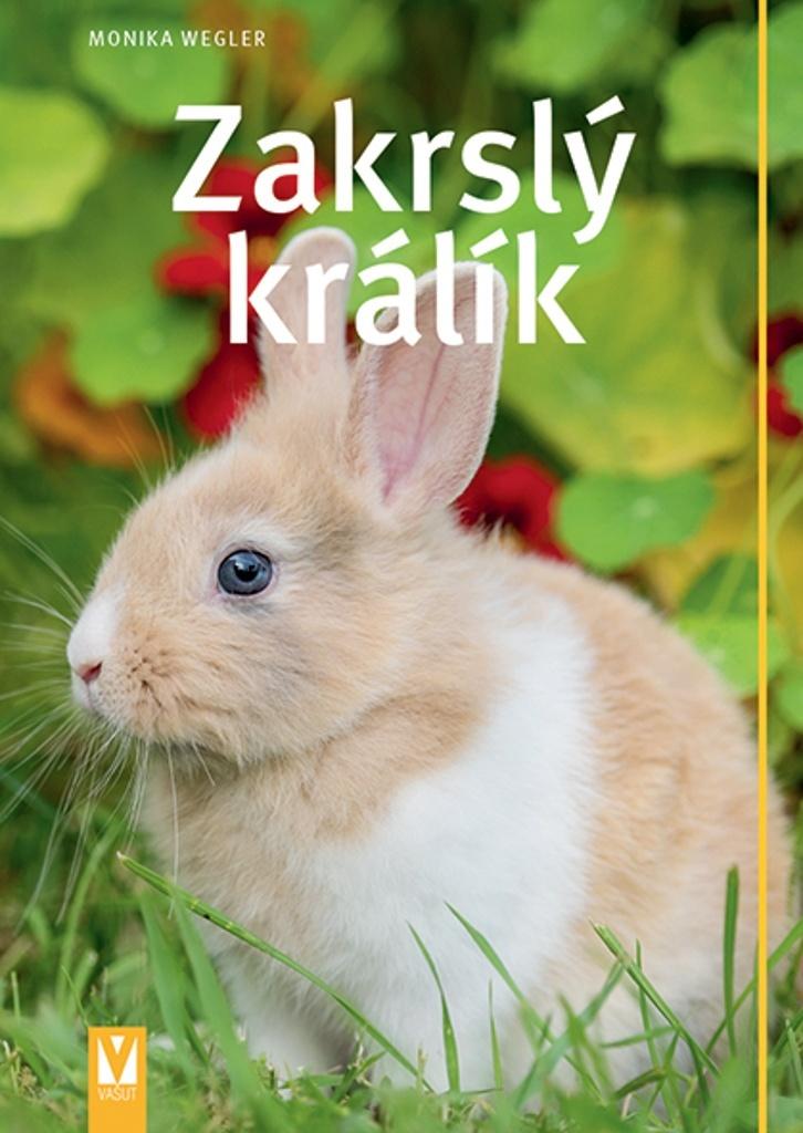 Zakrslý králík - Monika Wegler